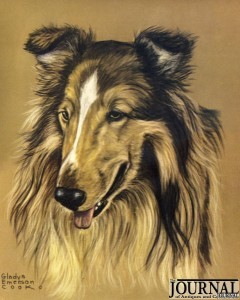 A Collie drawing by Gladys Emerson Cook
