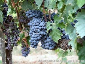 Ken's Korner: 16,400 gallons of fine wine – down the drain