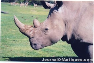 Ken's Korner: Man jailed for trying to steal a rhino head