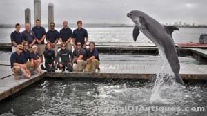 Ken's Korner: Navy dolphin finds 130-year-old torpedo