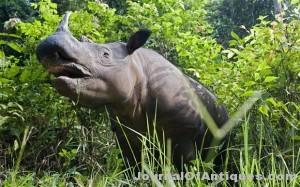 Ken's Korner: Number of rhinoceroses in Mozambique is zero