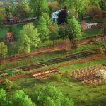 Seeding a Historic Garden