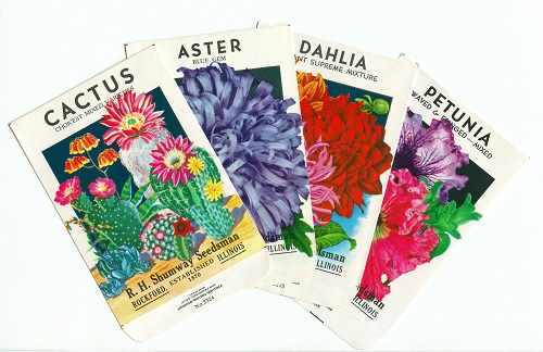 "1926 Vintage GARDEN FLOWER /""SWEET PEAS/"" GORGEOUS COLOR Art Print Lithograph"