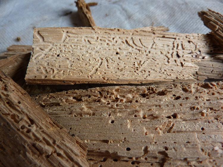 worm damaged wood