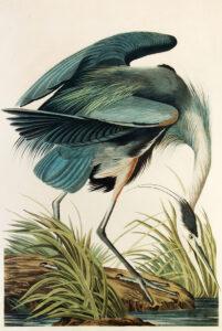 "John James Audubon (1785–1851), ""Great Blue Heron"" ca. 1834"