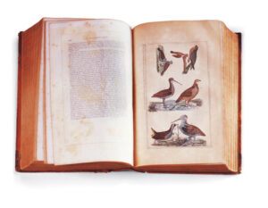Figure 5: Wilson's American Ornithology. New York: Samuels, 1853. Th15, Gift of Mr. Walton Ricketson and Miss Anna Ricketson (1929). photo courtesy of the Concord Museum