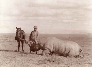 For Teddy Roosevelt, the white rhino was the only species of heavy game left for the expedition to collect, and, of all the species, it was the one the Smithsonian would likely never have an opportunity to collect again. photo: Smithsonian Institution Archives